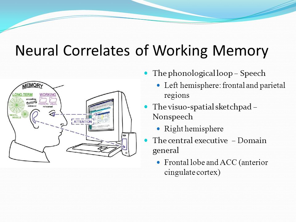 Neural Correlates of Working Memory  The phonological loop – Speech  Left hemisphere: frontal and parietal regions  The visuo-spatial sketchpad – Nonspeech  Right hemisphere  The central executive – Domain general  Frontal lobe and ACC (anterior cingulate cortex)