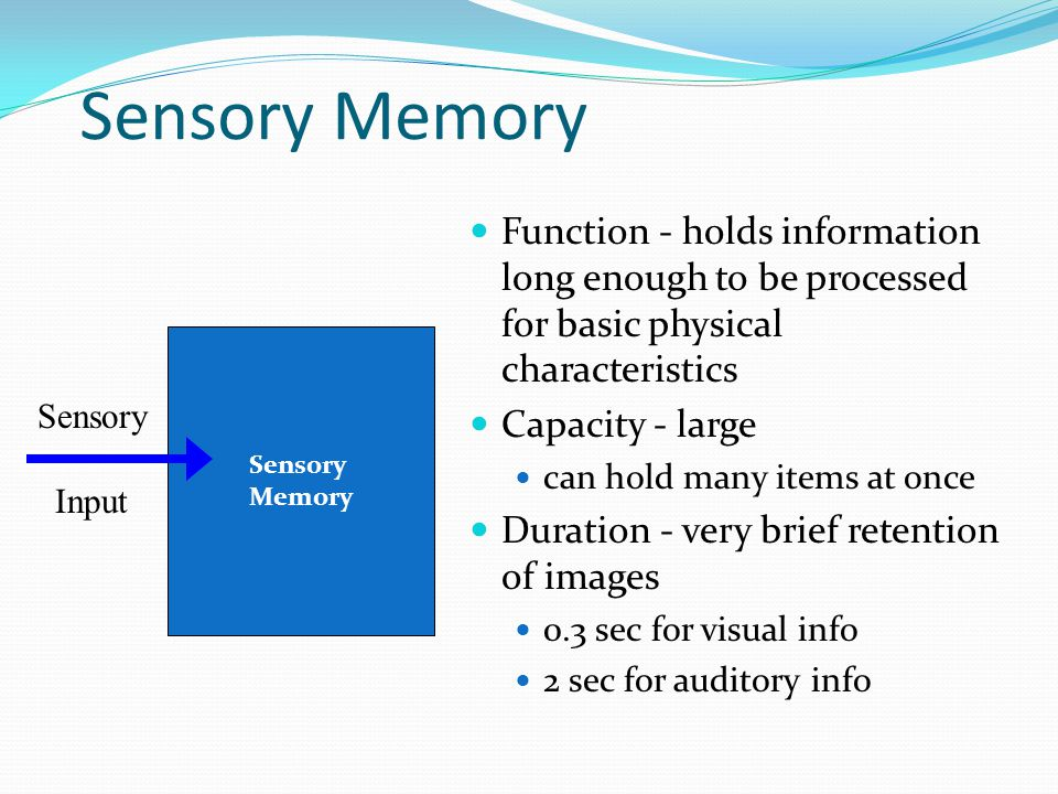 Sensory Memory  Function - holds information long enough to be processed for basic physical characteristics  Capacity - large  can hold many items