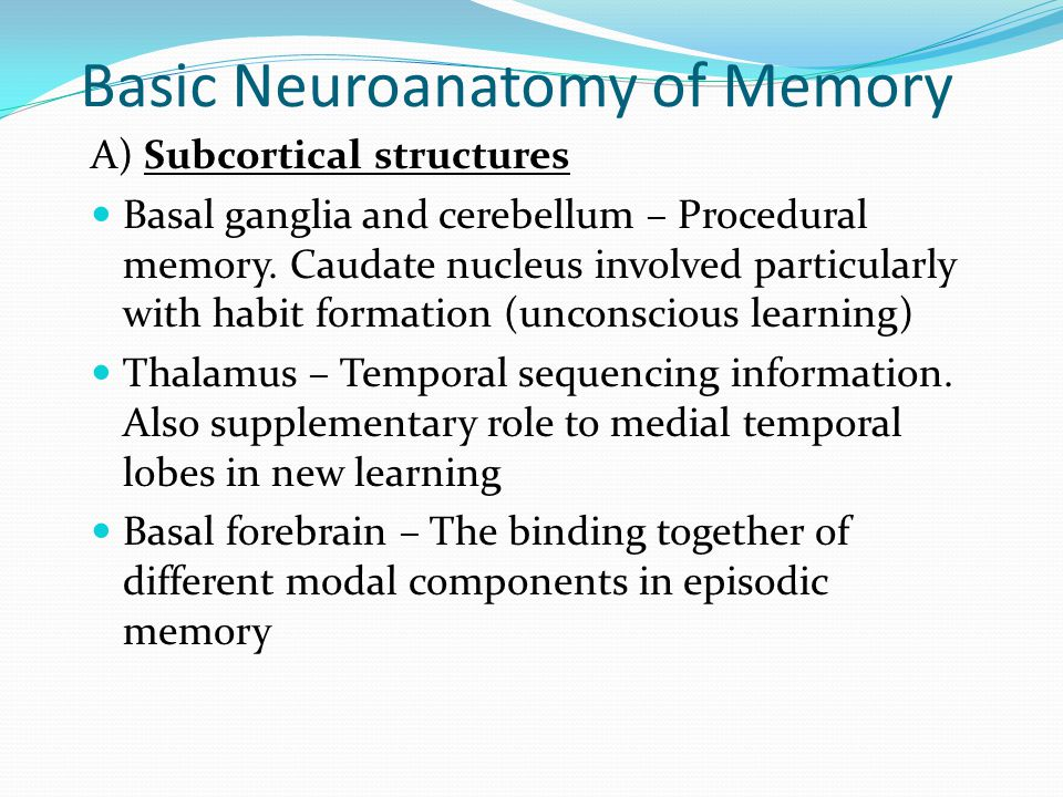 Basic Neuroanatomy of Memory A) Subcortical structures  Basal ganglia and cerebellum – Procedural memory. Caudate nucleus involved particularly with