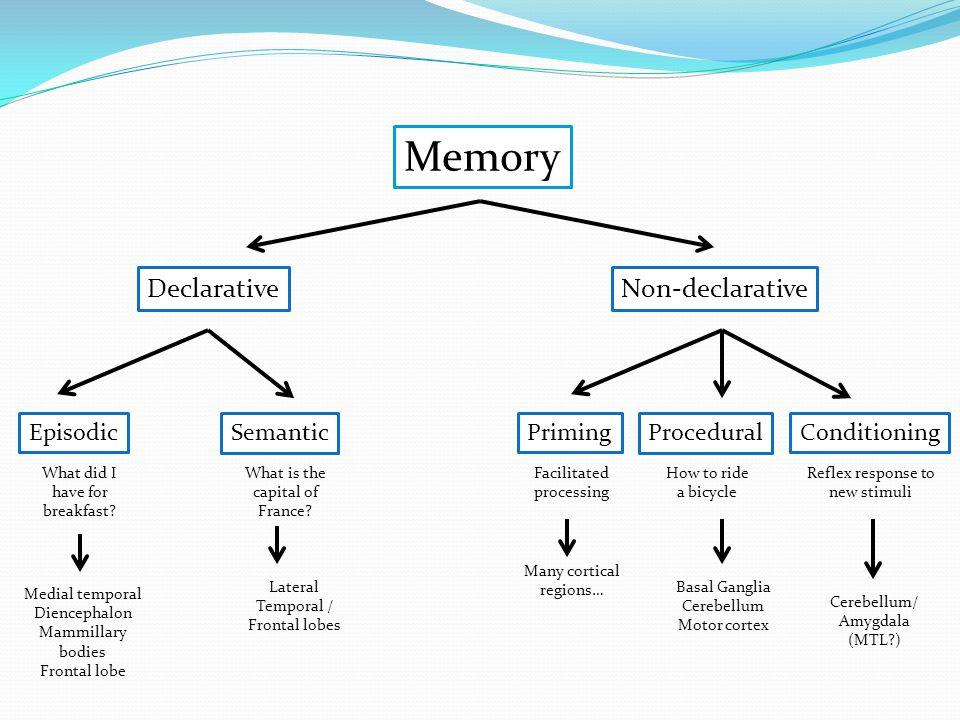 Memory DeclarativeNon-declarative SemanticEpisodicPrimingProceduralConditioning What did I have for breakfast? What is the capital of France? Facilita