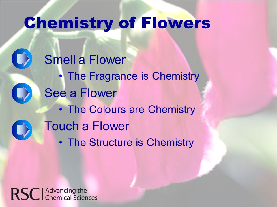 Chemistry of Flowers Smell a Flower •The Fragrance is Chemistry See a Flower •The Colours are Chemistry Touch a Flower •The Structure is Chemistry