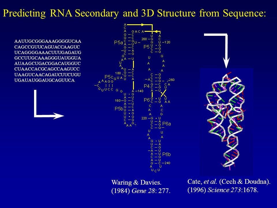 AAUUGCGGGAAAGGGGUCAA CAGCCGUUCAGUACCAAGUC UCAGGGGAAACUUUGAGAUG GCCUUGCAAAGGGUAUGGUA AUAAGCUGACGGACAUGGUC CUAACCACGCAGCCAAGUCC UAAGUCAACAGAUCUUCUGU UGAUAUGGAUGCAGUUCA Predicting RNA Secondary and 3D Structure from Sequence: Cate, et al.