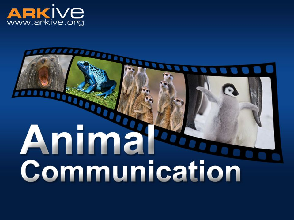 Animal communication Communication: the imparting or exchanging of information Used between members of the same species… ….or between members of different species.