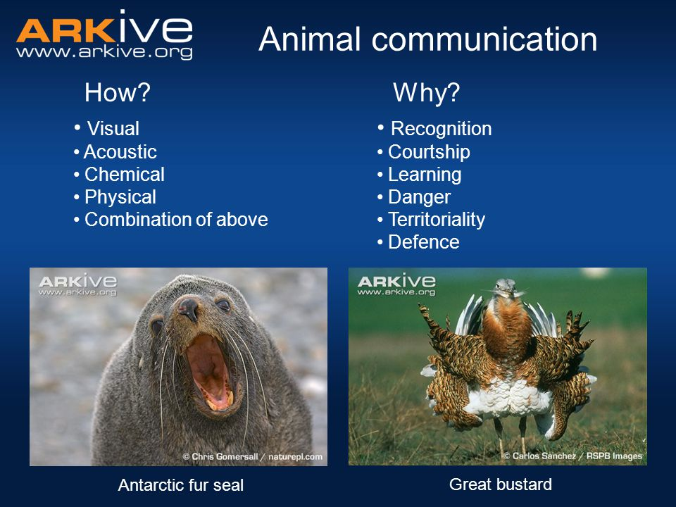 How and why animals communicate Recognition Hooker's sea lionEmperor penguin African elephant