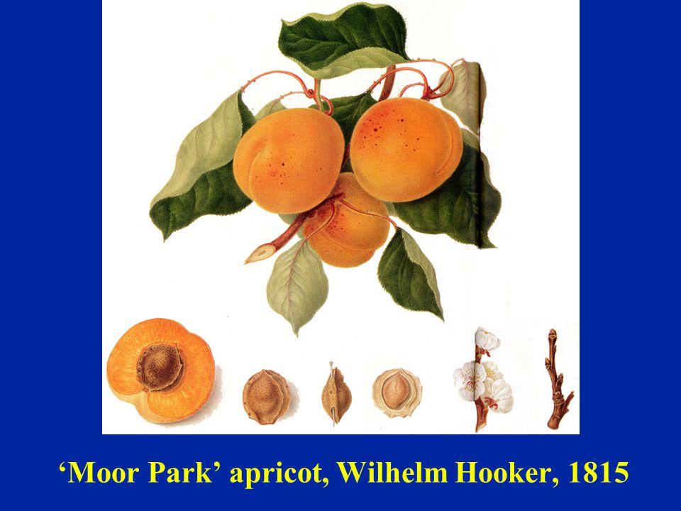 'Moor Park' apricot, Wilhelm Hooker, 1815