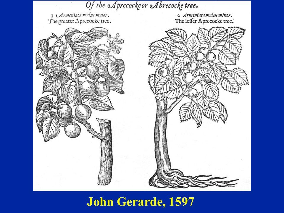 John Gerarde, 1597
