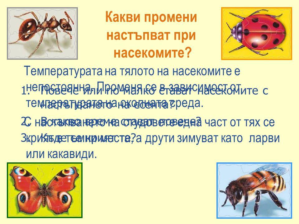 Какви промени настъпват при насекомите? 1.Повече или по-малко стават насекомите с настъпването на есента? 2.В какво време стават повече? 3.Къде се кри