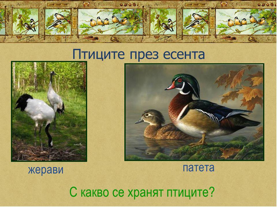 Птиците през есента С какво се хранят птиците? жерави патета
