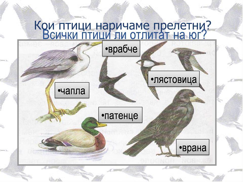 Кои птици наричаме прелетни? Всички птици ли отлитат на юг?