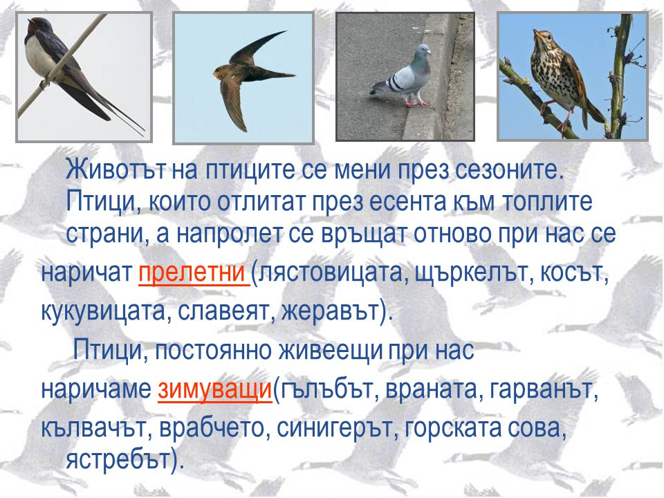 Животът на птиците се мени през сезоните. Птици, които отлитат през есента към топлите страни, а напролет се връщат отново при нас се наричат прелетни