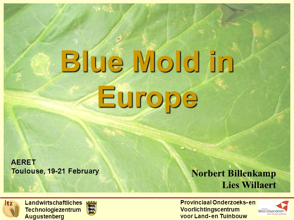 Landwirtschaftliches Technologiezentrum Augustenberg Provinciaal Onderzoeks- en Voorlichtingscentrum voor Land- en Tuinbouw Blue Mold in Europe AERET Toulouse, February Norbert Billenkamp Lies Willaert