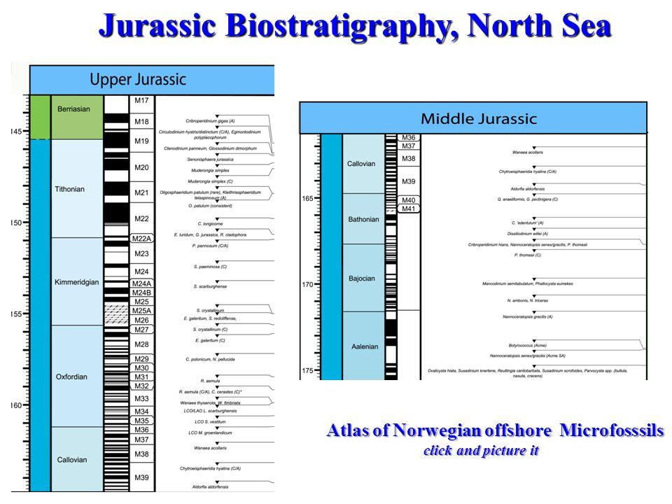 Jurassic Biostratigraphy, North Sea Jurassic Biostratigraphy, North Sea Atlas of Norwegian offshore Microfosssils click and picture it click and pictu