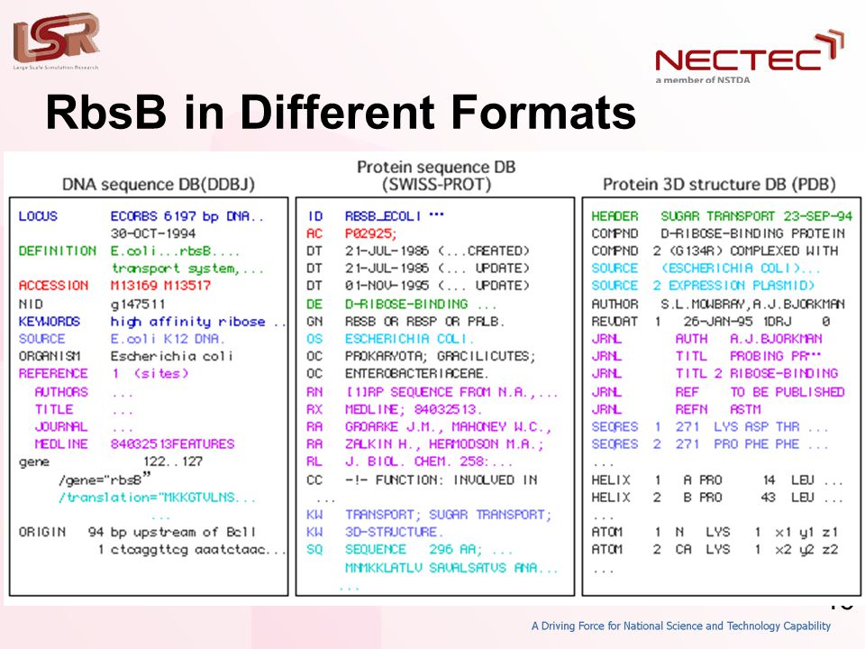 46 RbsB in Different Formats • DDBJ • SWISS-PROT • PDB