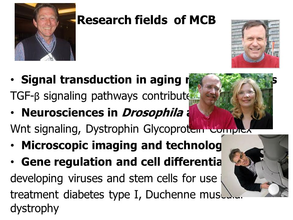 Research fields of MCB •Signal transduction in aging related diseases TGF- β signaling pathways contributes to cancer •Neurosciences in Drosophila and rodents Wnt signaling, Dystrophin Glycoprotein Complex •Microscopic imaging and technology •Gene regulation and cell differentiation developing viruses and stem cells for use in new treatment diabetes type I, Duchenne muscular dystrophy