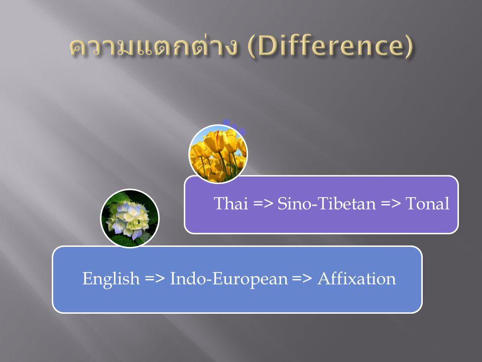 English => Indo-European => Affixation Thai => Sino-Tibetan => Tonal