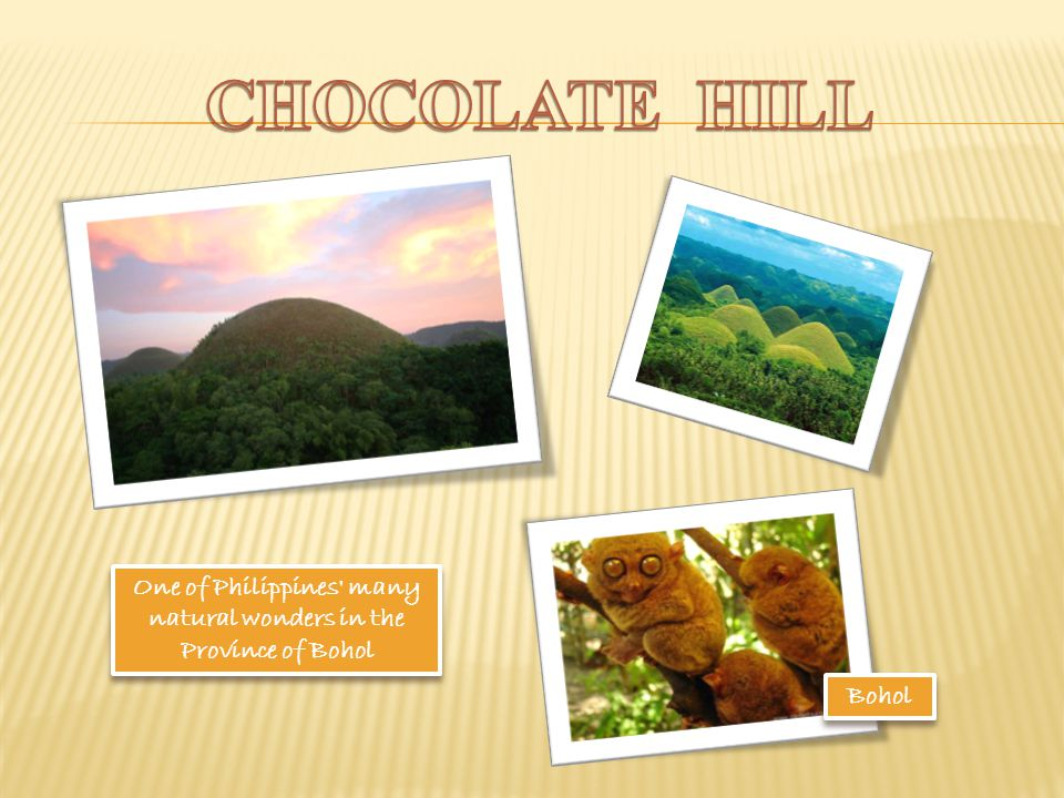One of Philippines many natural wonders in the Province of Bohol Bohol Bohol