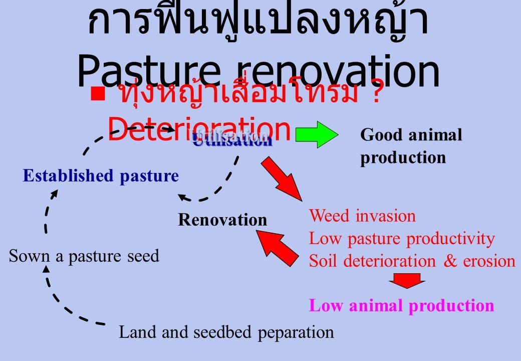 การฟื้นฟูแปลงหญ้า Pasture renovation  ทุ่งหญ้าเสื่อมโทรม .