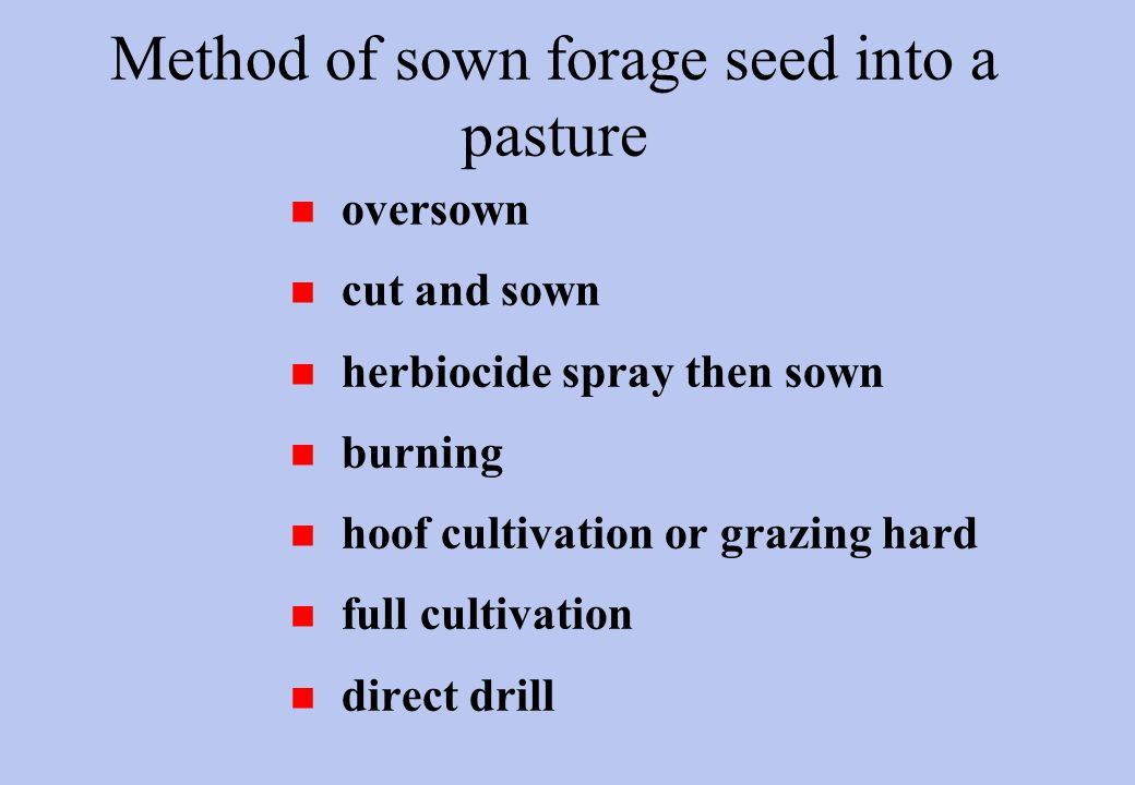 Method of sown forage seed into a pasture n oversown n cut and sown n herbiocide spray then sown n burning n hoof cultivation or grazing hard n full cultivation n direct drill