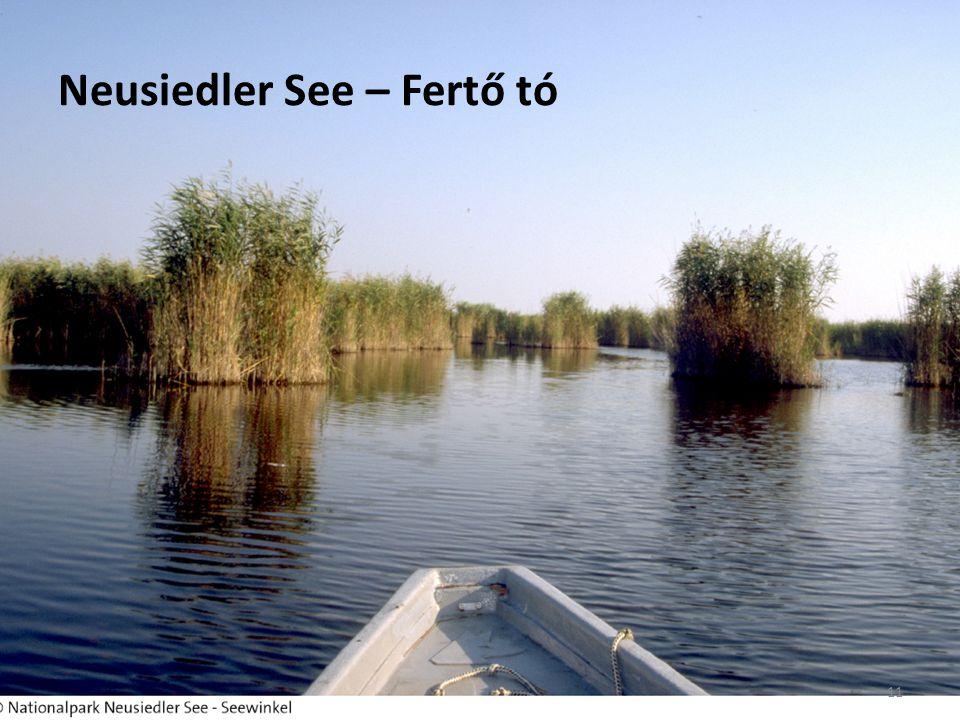 Neusiedler See – Fertő tó 11