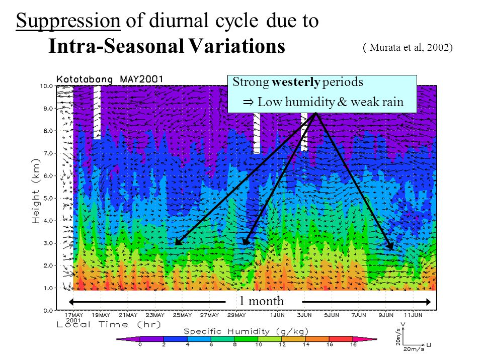 Suppression of diurnal cycle due to Intra-Seasonal Variations ( Murata et al, 2002) Strong westerly periods ⇒ Low humidity & weak rain 1 month