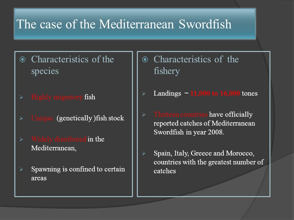 The case of the Mediterranean Swordfish  Characteristics of the species  Highly migratory fish  Unique (genetically )fish stock  Widely distributed in the Mediterranean,  Spawning is confined to certain areas  Characteristics of the fishery  Landings ~ 11,000 to 16,000 tones  Thirteen countries have officially reported catches of Mediterranean Swordfish in year 2008.