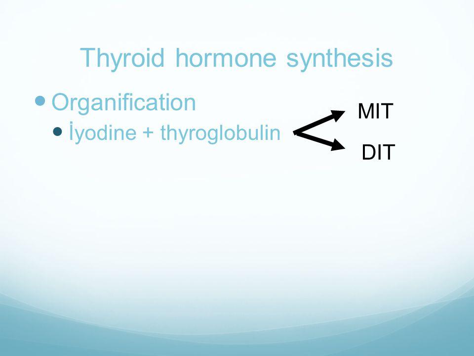 Thyroid hormone synthesis  Organification  İyodine + thyroglobulin MIT DIT