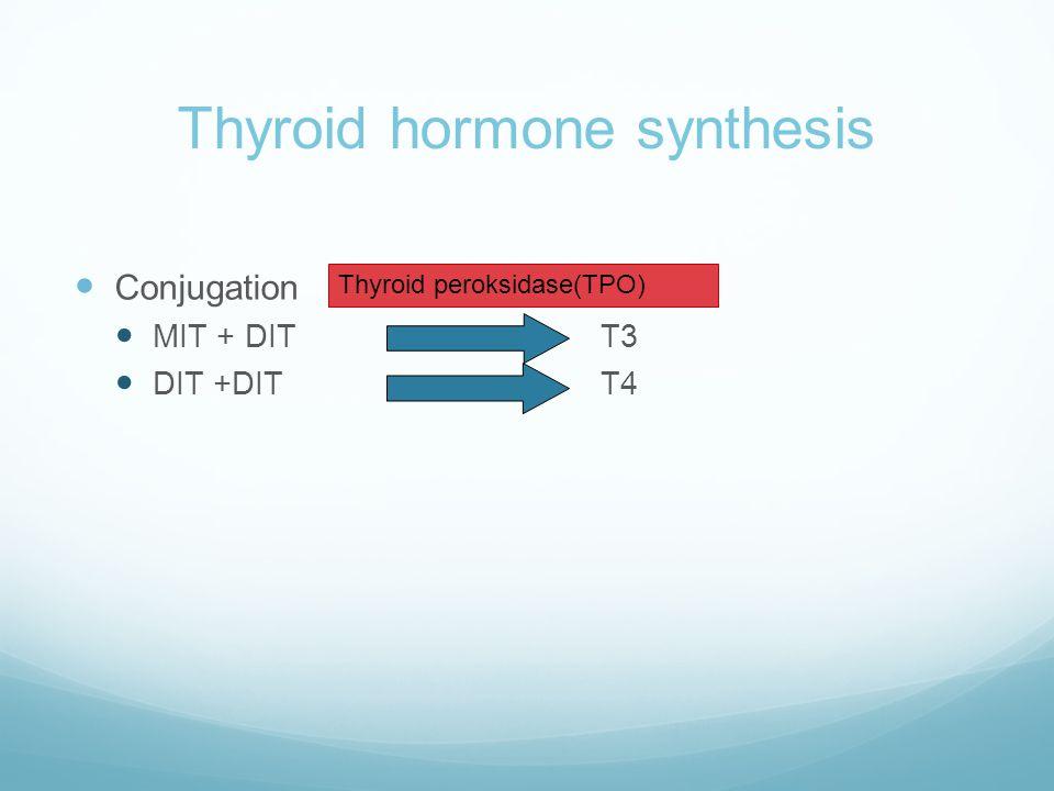 Thyroid hormone synthesis  Conjugation  MIT + DIT T3  DIT +DITT4 Thyroid peroksidase(TPO)