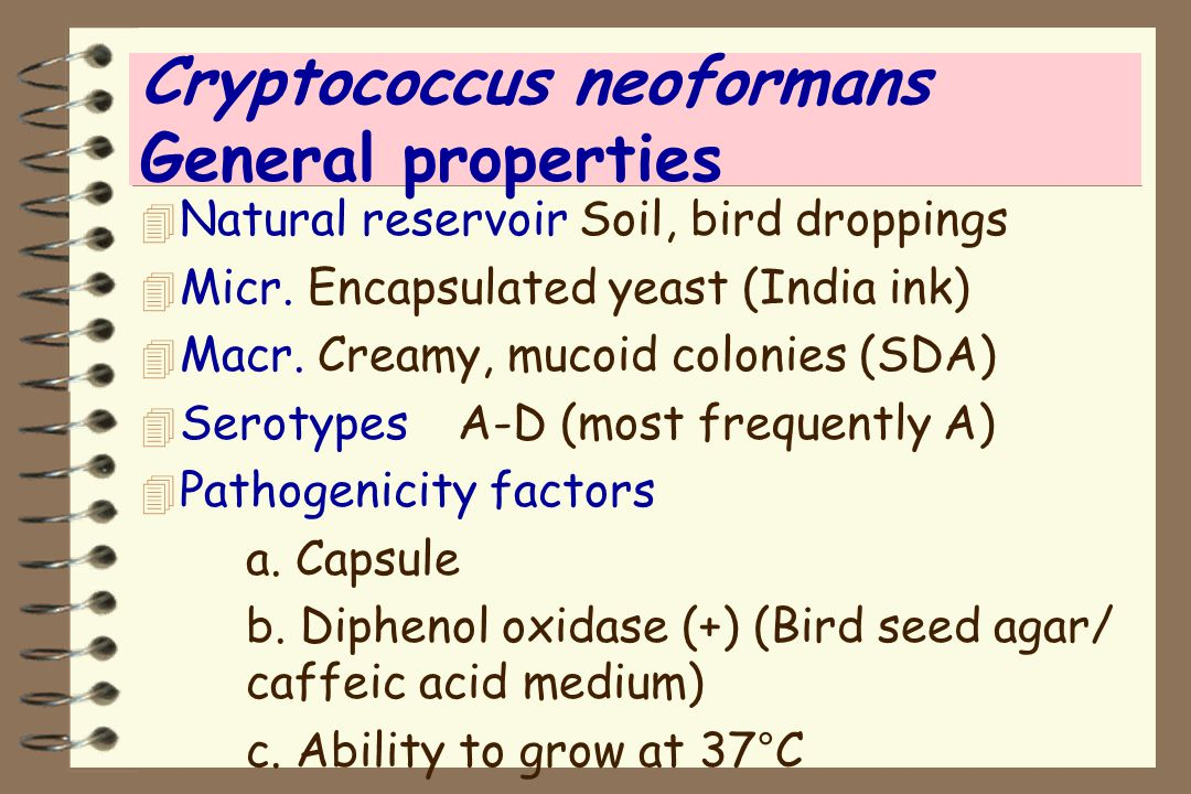 Cryptococcus neoformans General properties 4 Natural reservoir Soil, bird droppings 4 Micr. Encapsulated yeast (India ink) 4 Macr. Creamy, mucoid colo
