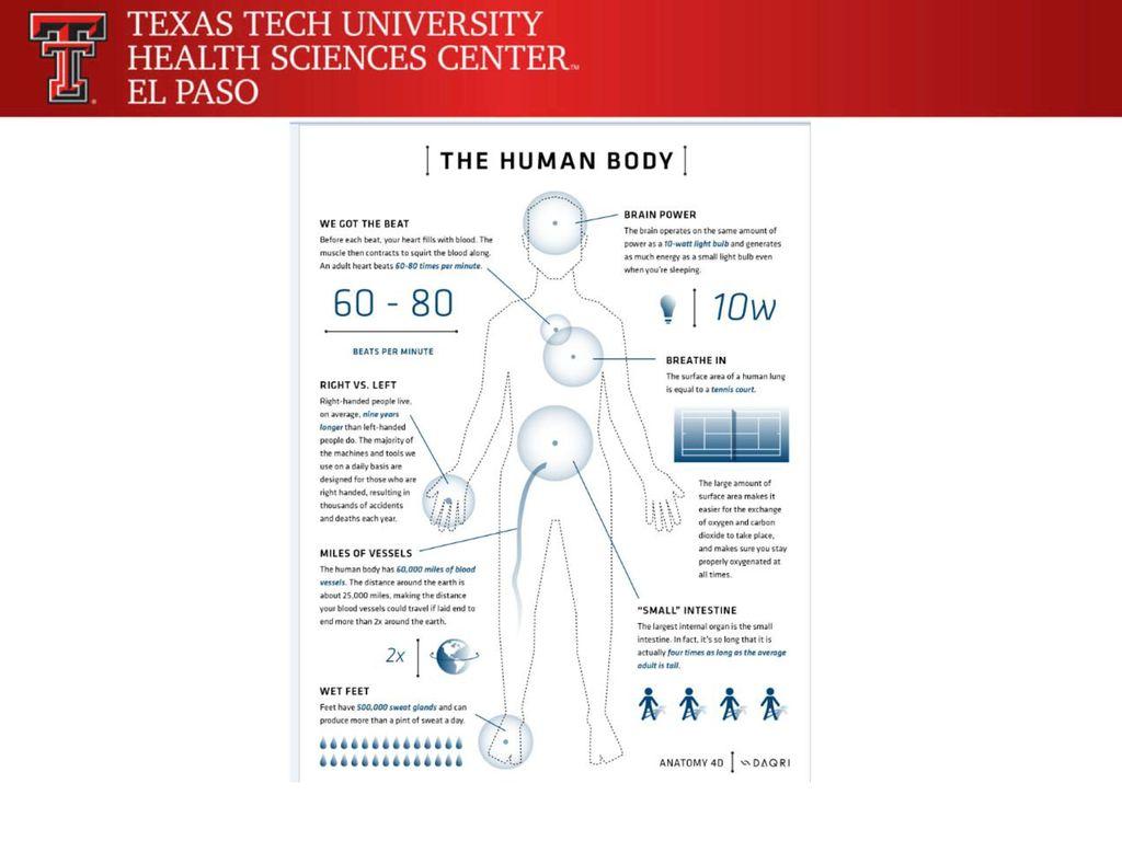 Charmant 4d Anatomie App Bilder - Anatomie Von Menschlichen ...