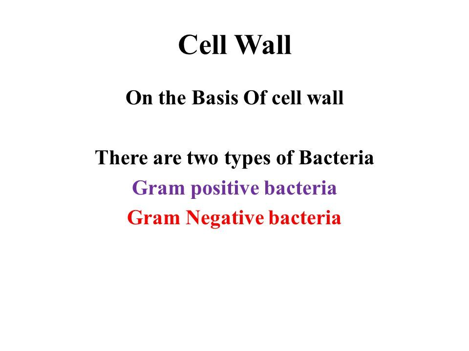Cell Wall On the Basis Of cell wall There are two types of Bacteria Gram positive bacteria Gram Negative bacteria