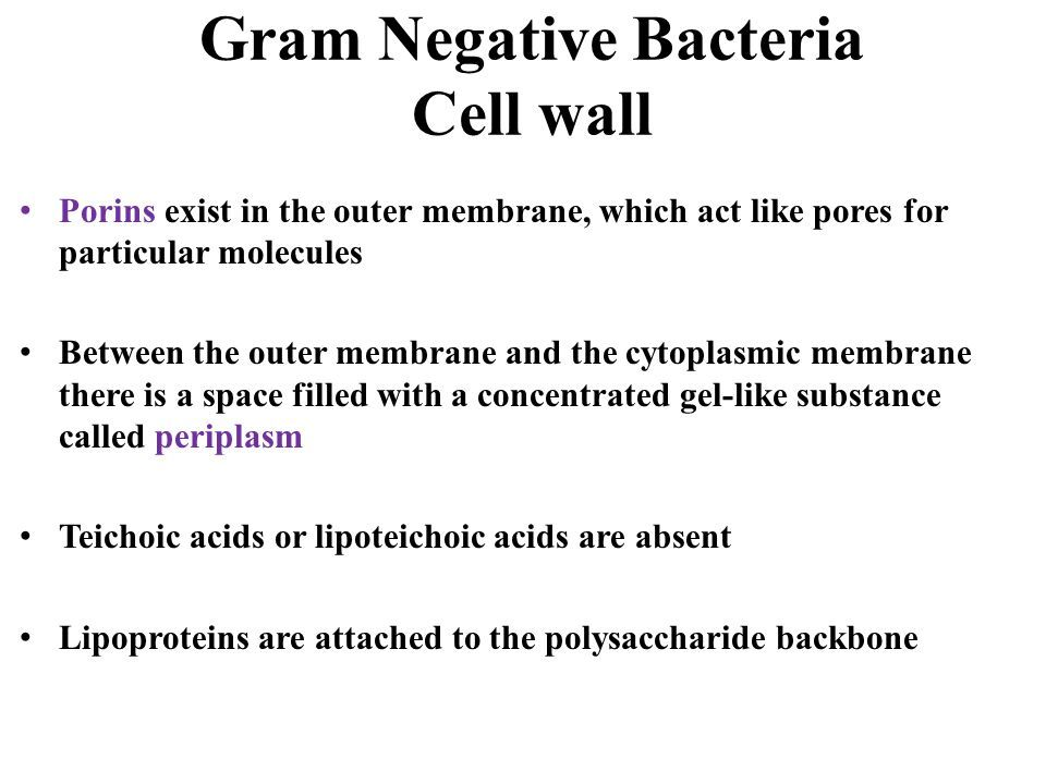 Gram Negative Bacteria Cell wall Porins exist in the outer membrane, which act like pores for particular molecules Between the outer membrane and the cytoplasmic membrane there is a space filled with a concentrated gel-like substance called periplasm Teichoic acids or lipoteichoic acids are absent Lipoproteins are attached to the polysaccharide backbone
