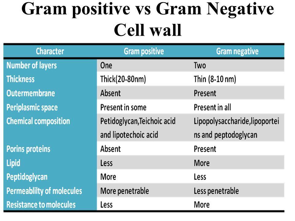 Gram positive vs Gram Negative Cell wall
