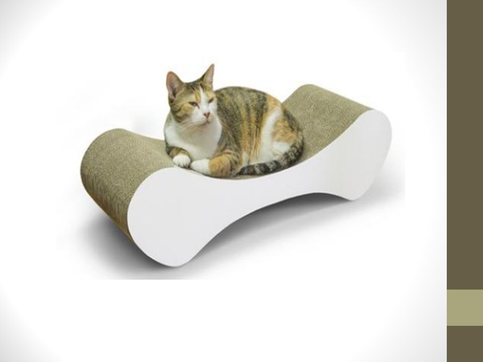 4 Wondering Which Is The Best Place To Get Cat Scratchers Online If That S Case Then You Need Visit Https Dnclifestyle Au And Find