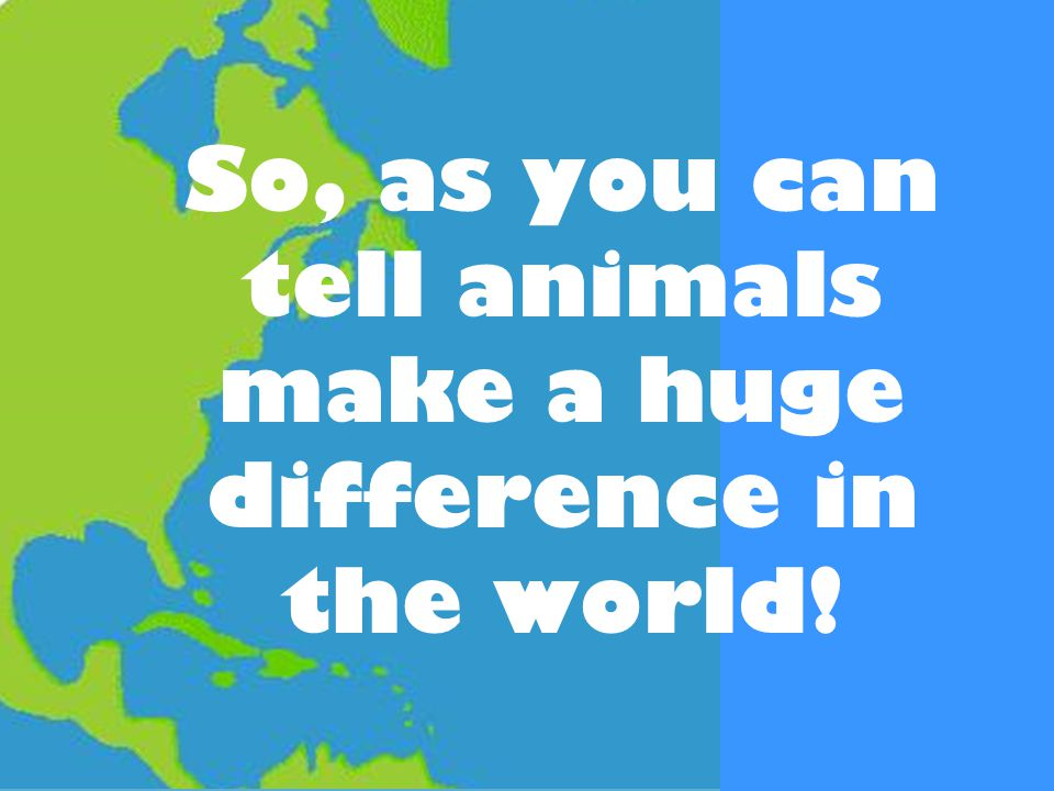 So, as you can tell animals make a huge difference in the world!