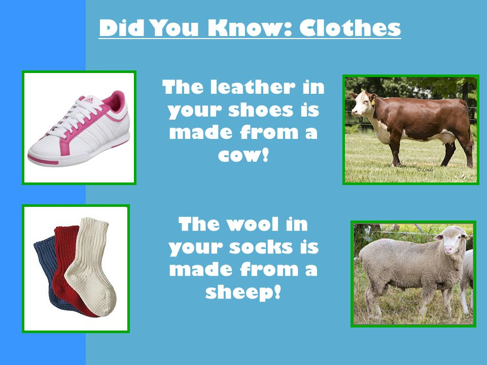 Did You Know: Clothes The leather in your belt is made from cattle .