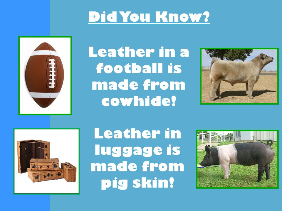 Did You Know Leather in a football is made from cowhide! Leather in luggage is made from pig skin!