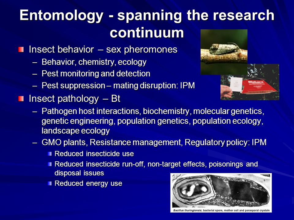 Entomology - spanning the research continuum Insect behavior – sex pheromones –Behavior, chemistry, ecology –Pest monitoring and detection –Pest suppression – mating disruption: IPM Insect pathology – Bt –Pathogen host interactions, biochemistry, molecular genetics, genetic engineering, population genetics, population ecology, landscape ecology –GMO plants, Resistance management, Regulatory policy: IPM Reduced insecticide use Reduced insecticide run-off, non-target effects, poisonings and disposal issues Reduced energy use