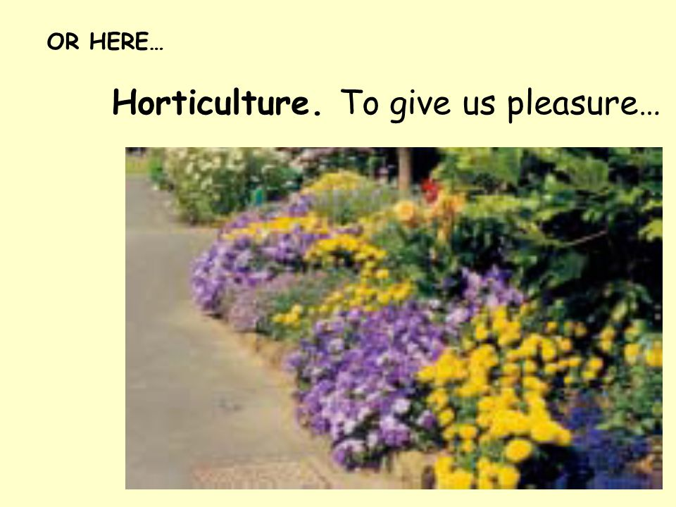 Horticulture. To give us pleasure… OR HERE…