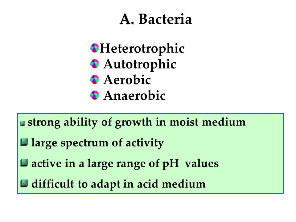 A. A. Bacteria Heterotrophic Autotrophic Aerobic Anaerobic strong ability of growth in moist medium large spectrum of activity active in a large range