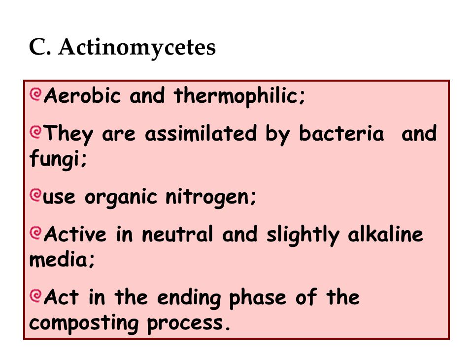 C. Actinomycetes Aerobic and thermophilic; They are assimilated by bacteria and fungi; use organic nitrogen; Active in neutral and slightly alkaline m