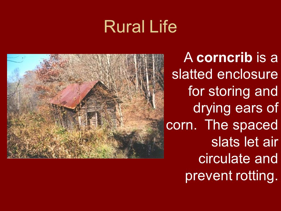 Rural Life A corncrib is a slatted enclosure for storing and drying ears of corn. The spaced slats let air circulate and prevent rotting.