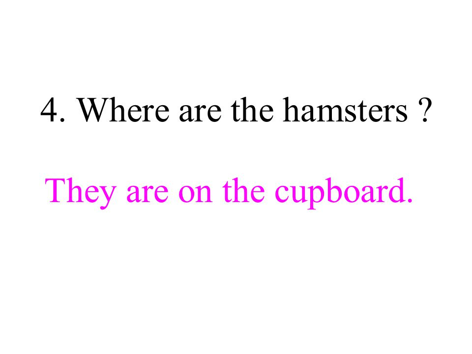 4. Where are the hamsters They are on the cupboard.