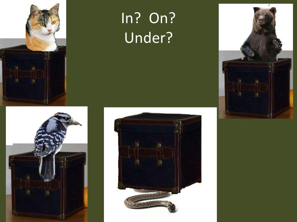 In? On? Under?