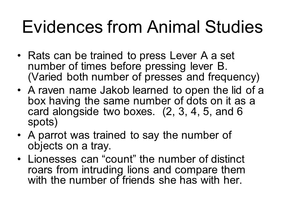 Evidences from Animal Studies Rats can be trained to press Lever A a set number of times before pressing lever B.