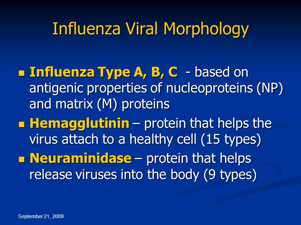 September 21, 2009 Influenza Viral Morphology Influenza Type A, B, C - based on antigenic properties of nucleoproteins (NP) and matrix (M) proteins Influenza Type A, B, C - based on antigenic properties of nucleoproteins (NP) and matrix (M) proteins Hemagglutinin – protein that helps the virus attach to a healthy cell (15 types) Hemagglutinin – protein that helps the virus attach to a healthy cell (15 types) Neuraminidase – protein that helps release viruses into the body (9 types) Neuraminidase – protein that helps release viruses into the body (9 types)