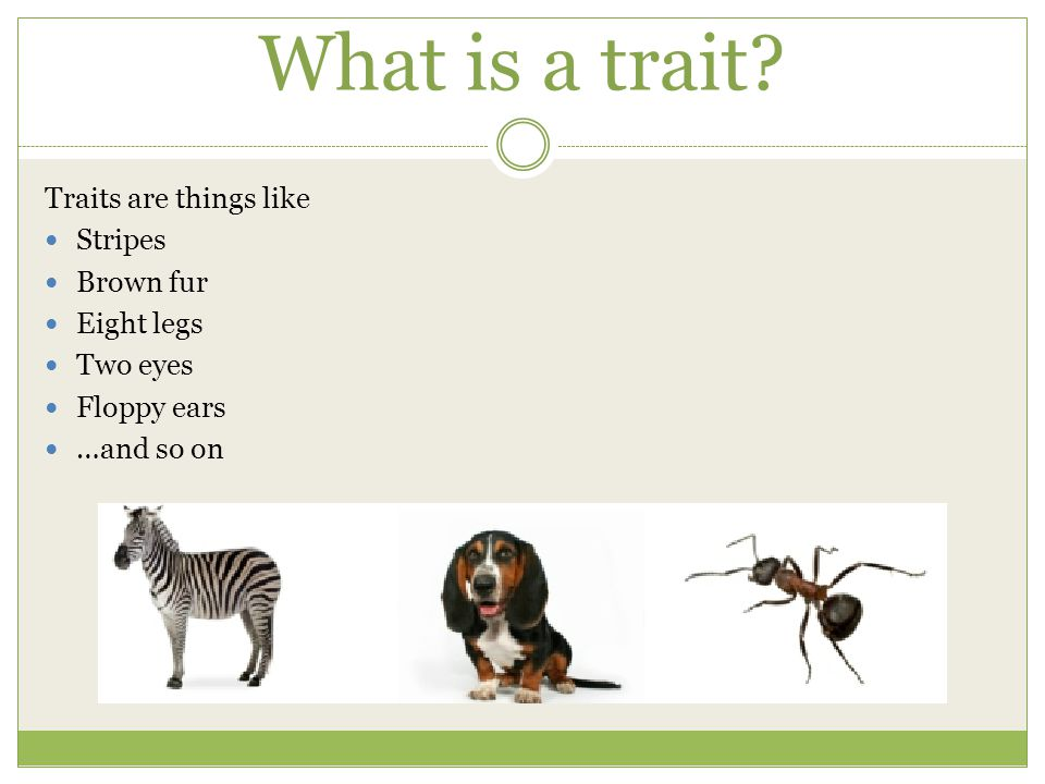 What is a trait.