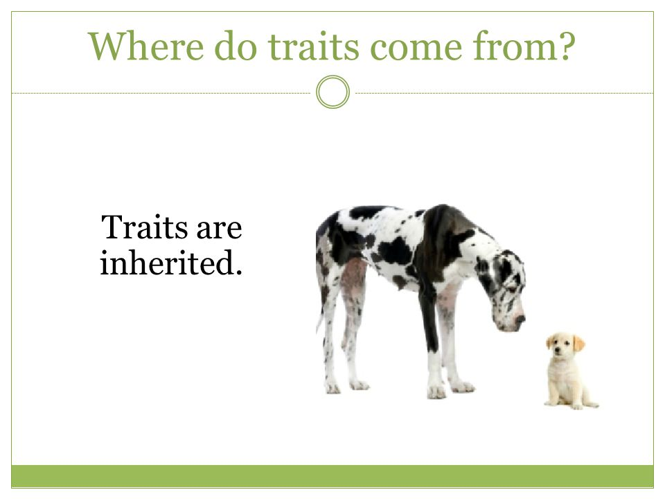 Where do traits come from? So what do their parents look like?