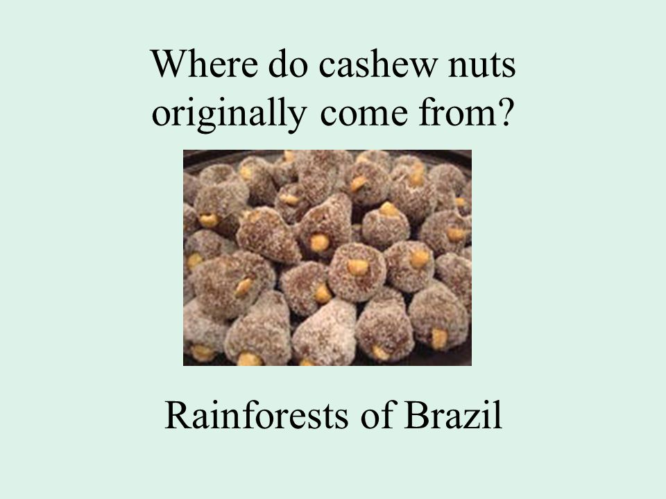 Where do cashew nuts originally come from Rainforests of Brazil
