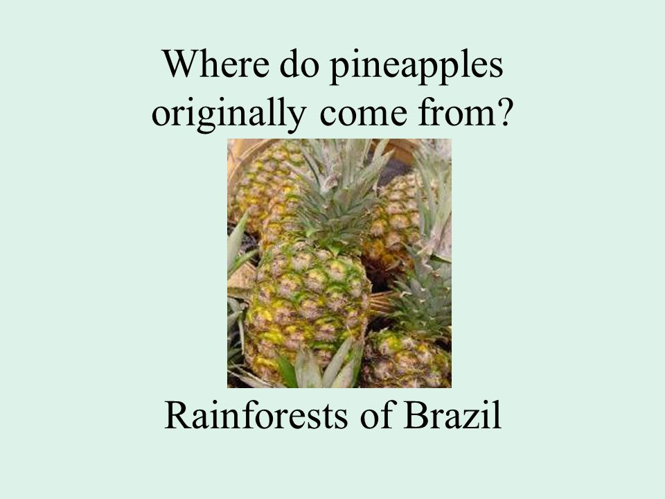 Where do pineapples originally come from Rainforests of Brazil