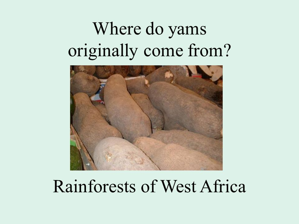 Where do yams originally come from Rainforests of West Africa